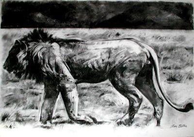 Lion Charcoal