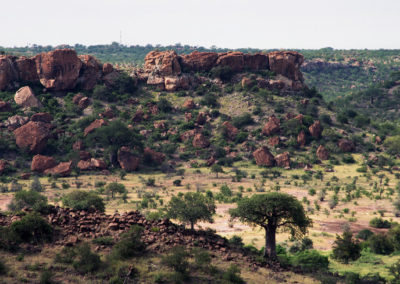 Outcrop dyke baobab view from Mapungubwe